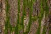 Close Up of Bark/Moss