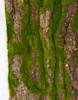 39 Inch x 19.5 Inch Foam Bark/Moss Sheet