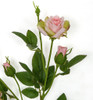 Close up of Small and Large Pink Roses
