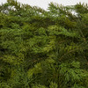 Close Up of Mixed Cedar and Pine Foliage