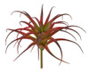 """A-184340 11.5"""" Tillandsia Plant in Red/Green"""