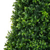 UV Dwarf Boxwood Spiral Topiary - 4 Foot, 6 Foot, 8 Foot and 10 Foot