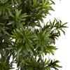 7 Foot or 8 Foot Podocarpus Topiary Tree