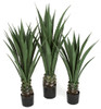 "36"" , 45"" and 52"" Agave Plants in Weighted Bases Limited UV Protection / Fire Retardant"