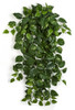 "PR-190030  50"" Pothos Ivy Bush Variegate Green/Cream"