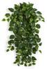 "PR-190030  50"" Pothos Ivy Bush Variegate Green/Cream"