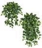 "36"" or 50"" Pothos Ivy Bushes"