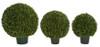 Japanese Boxwood Ball Topiary