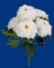 P-180749 - White/Cream