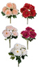 Peony Bushes in Peach, Light Pink, Red, Fuchsia, or White