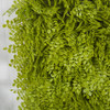 Close Up of Lime Green Button Fern