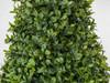 Close Up of English Boxwood Foliage