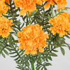 Close Up of Light Orange Marigold Flower