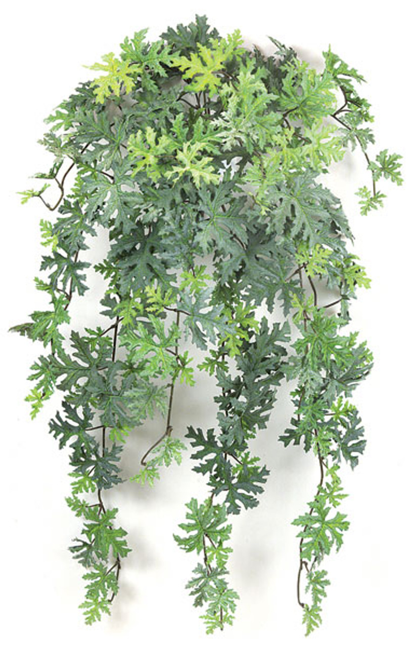 30 Inch Hanging Frosted Citronella Bush Autograph Foliages