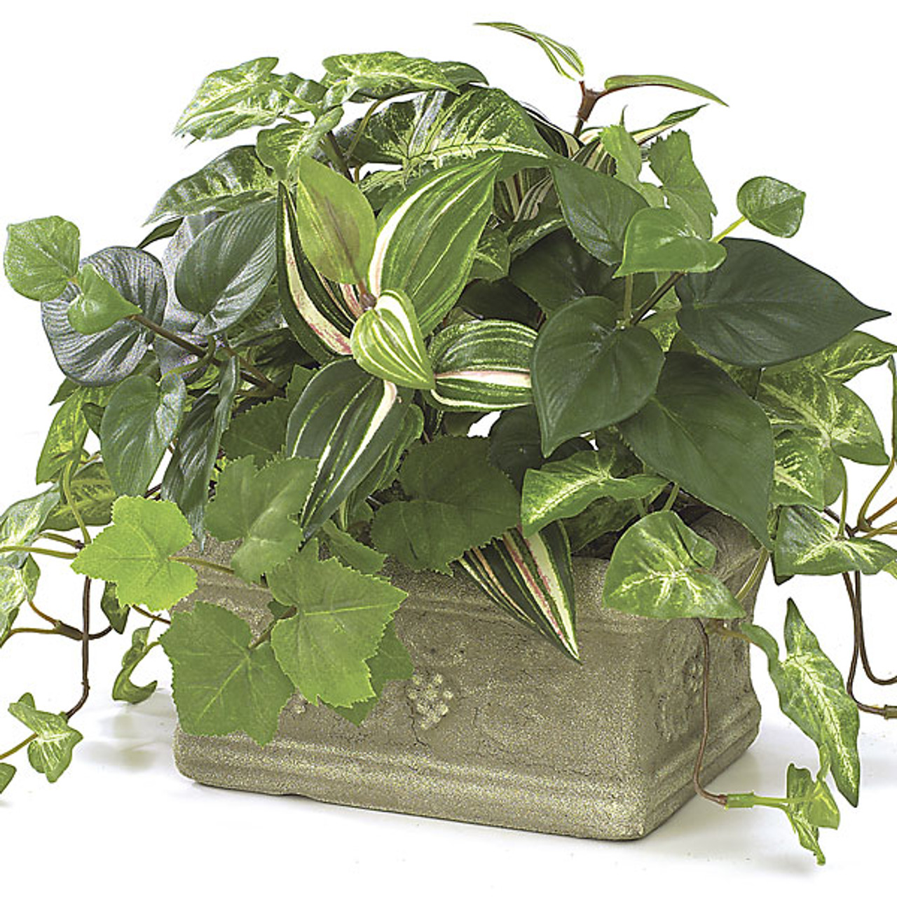 9 Inch Potted Syngonium Wandering Jew Pothos Ivy Plant Autograph Foliages