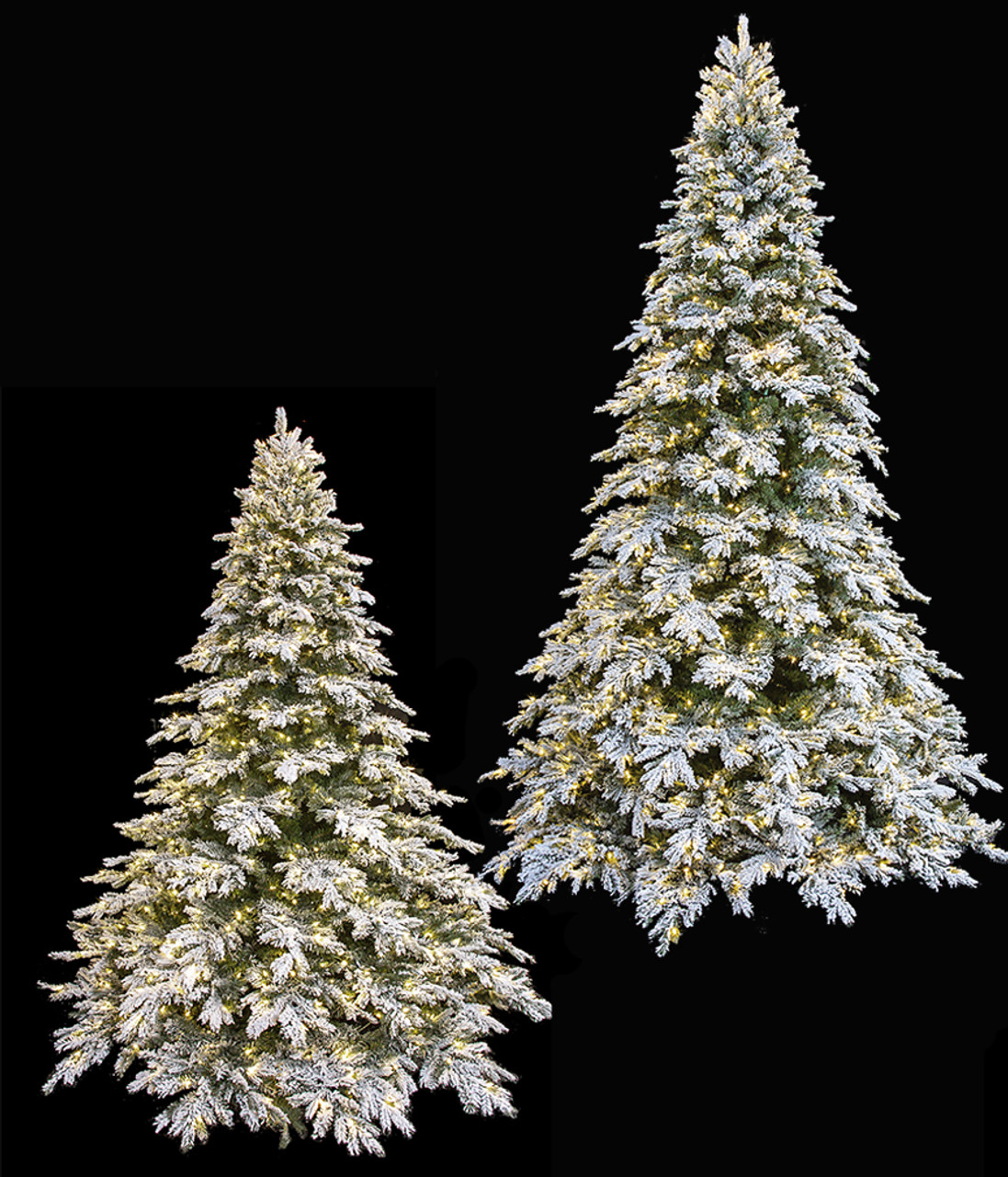 Pe Pvc Flocked Black Mountain Spruce Trees 5 To 12 Flocked Led Trees Autograph Foliages