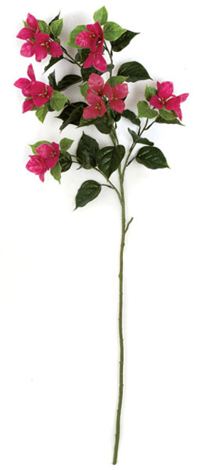 A-144143 - Beauty