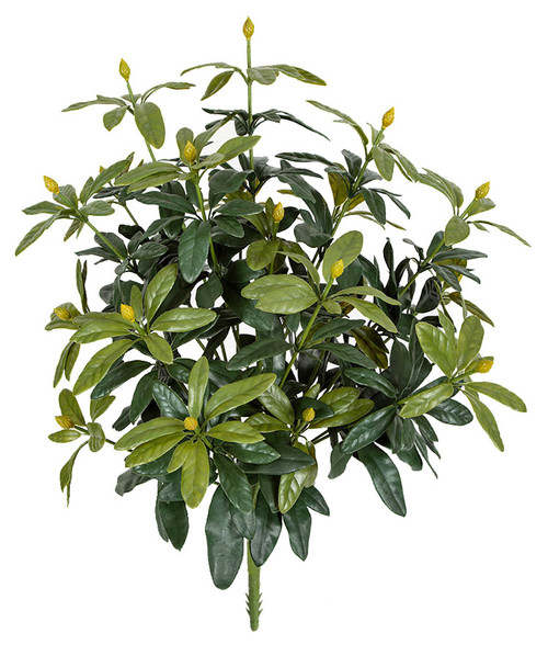"""37"""" Outdoor Rhododendron Plant"""