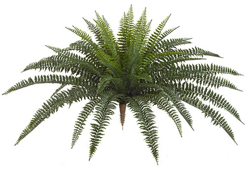 30 Inch Boston Fern 