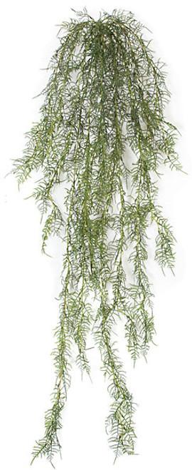 """A-11050560"""" Hanging Aparagus Bush"""