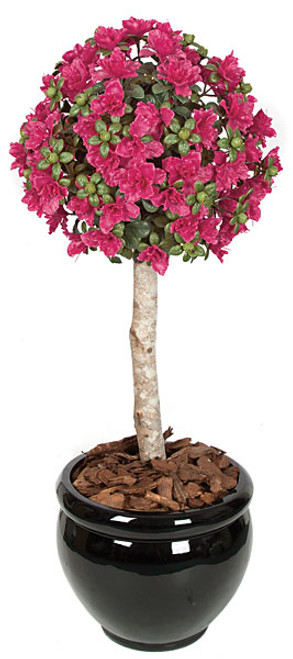 3.5' Azalea Ball Topiary 