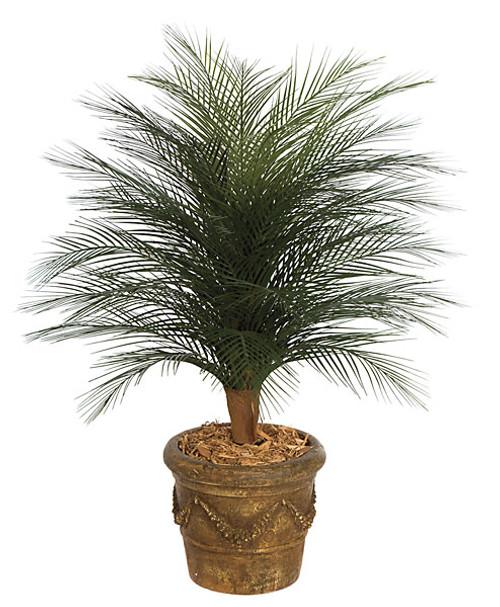 A-0933' Areca Palm Tree