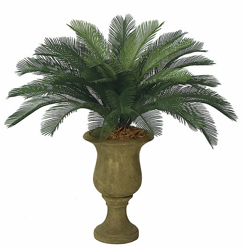"""3'  Cycas Palm Cluster36 Fronds 44 """" Width"""