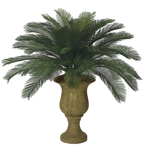 """3 '  Cycas Palm Cluster 48 Fronds 44"""" Width"""