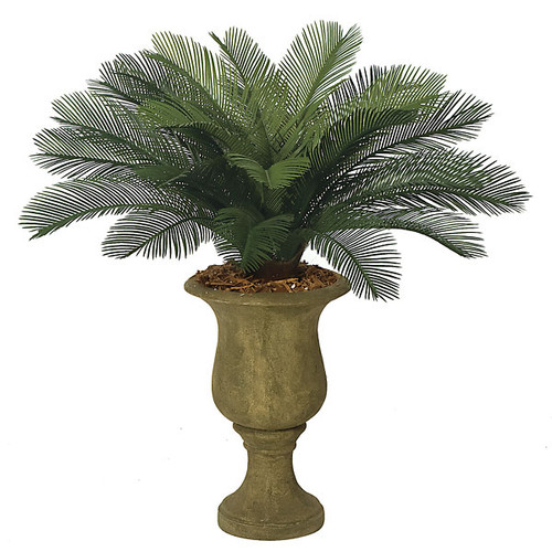 """3'  Cycas Palm Cluster24 Fronds 44"""" Width"""