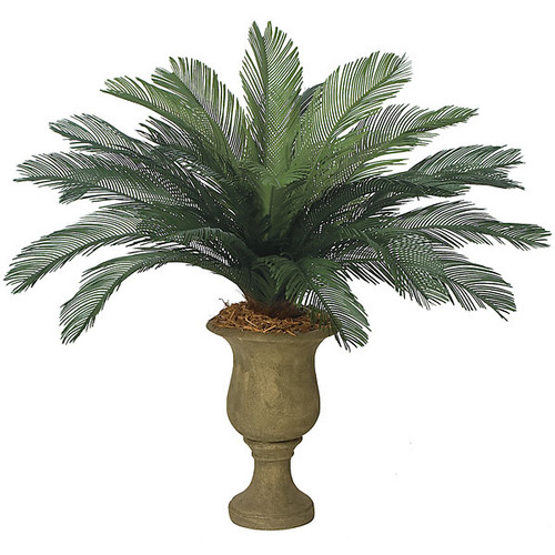 """44"""" Cycas Palm Cluster 24 Large Fronds 68"""" Width"""