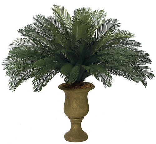 44 Inch Cycas Palm Cluster 36 Large Fronds68 Inch Width