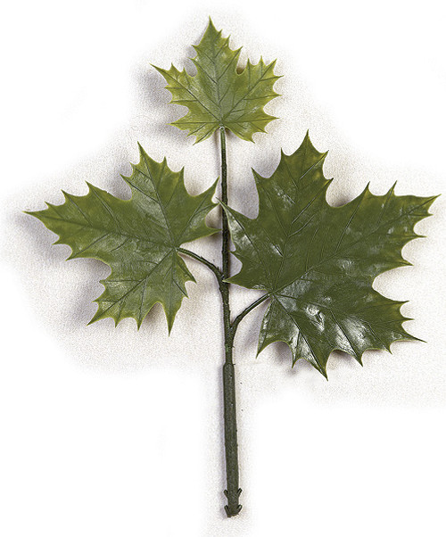 "15"" Sugar Maple Pick 
