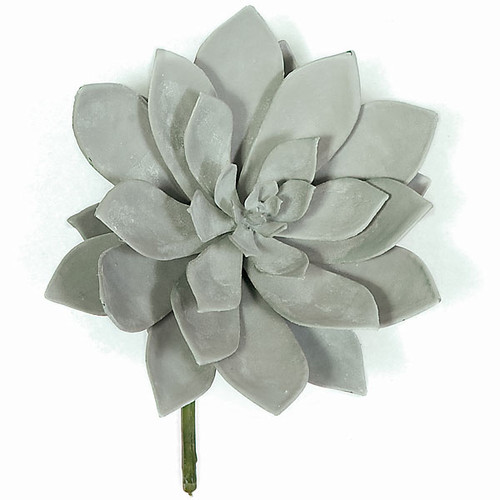 7 x 8 Inch Frosted Succulent - Grey/Green