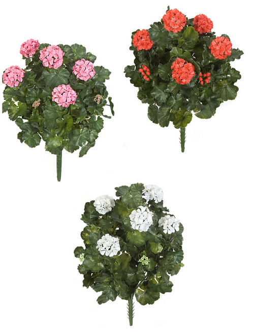 "Pink, Red or White 26"" Geranium Bushes"