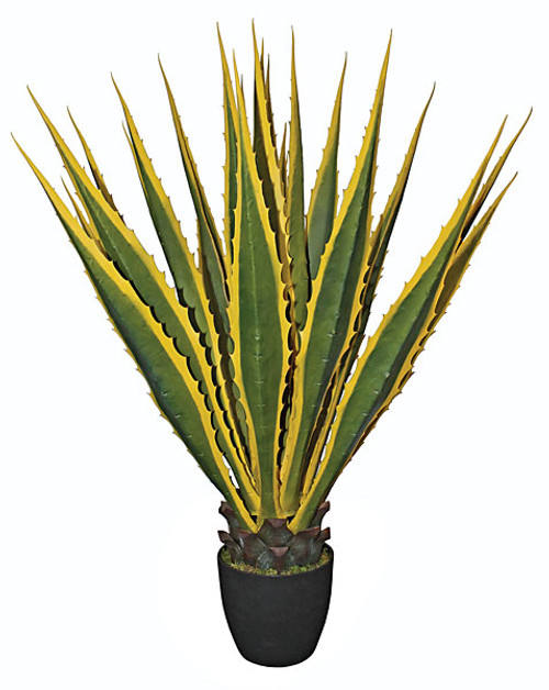 Potted Agave Plant Green/Yellow