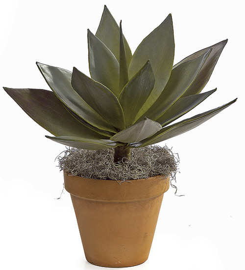 """23"""" Agave Plant"""
