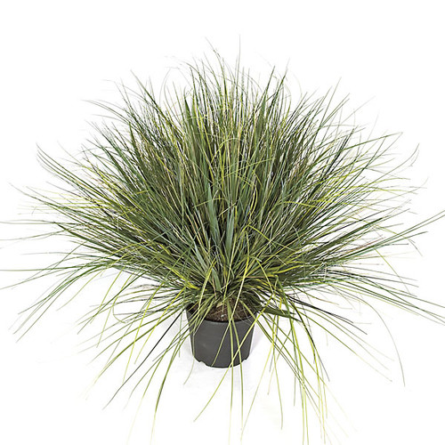 """30"""" PVC Onion Grass Potted in Weighted Base - Tutone Green"""