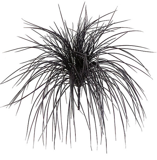 A-2377 Black Plastic Onion Grass