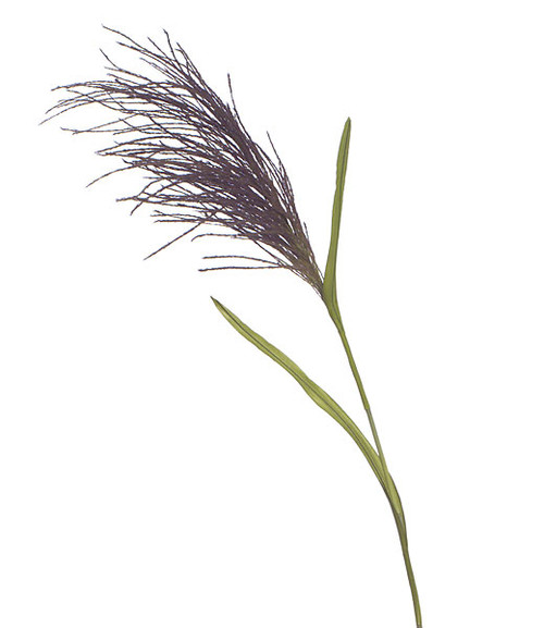A-60530 - 5' Plum Pampas Grass Stem