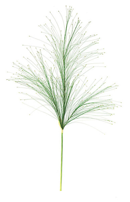 "A-81970 - 36"" Seed Grass - Green/Brown"