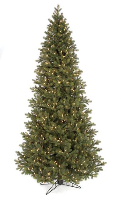 C-1404547.5' English Fir Tree Slim Size Tree