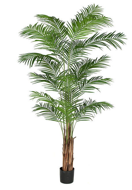 P-150820 - 8' Areca Palm with Wood Trunk and Weighted Base