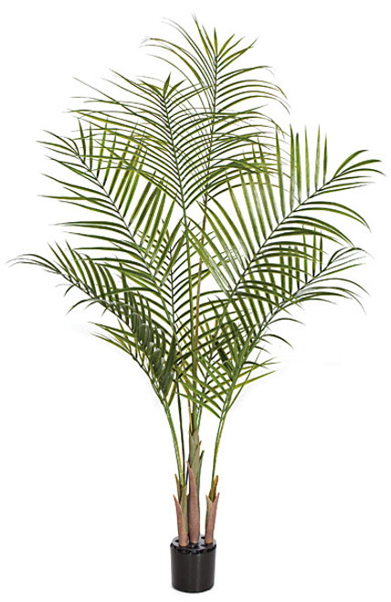 A-130980 5.5' Plastic Areca Palm Tree - Weighted Base