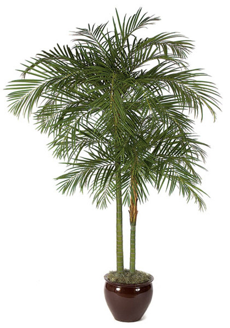 W-2691 10' Areca Palm Tree x Trunks - Decorative Planter Sold Separately