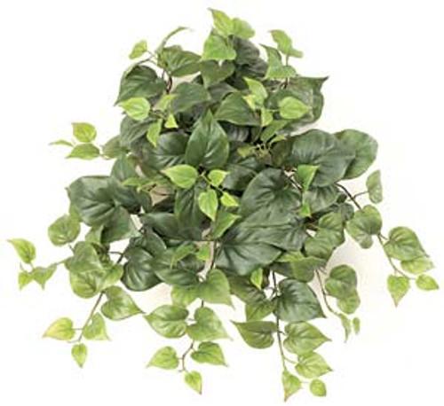 "P-735125"" Philodendron Bush"