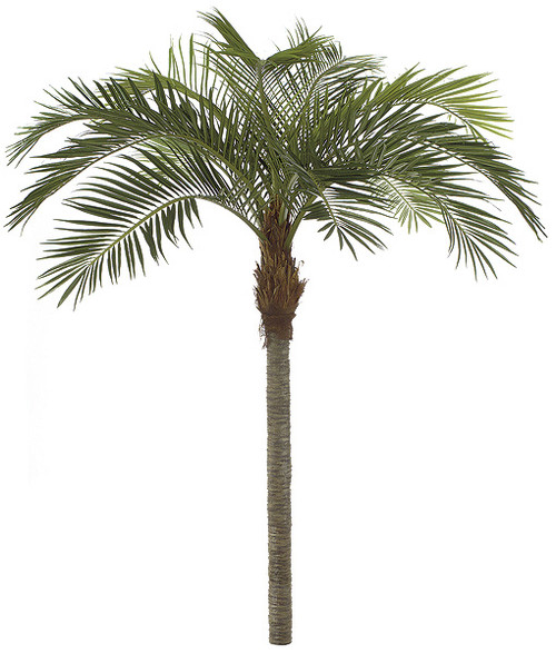 P-123200 11' Coconut Palm Tree - Straight Trunk - Metal Base Plate