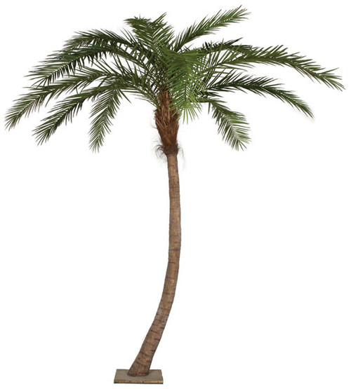 """P-126510 13' Phoenix Palm - Curved Trunk - 18"""" Pipe Only - No Weighted Base as Shown"""
