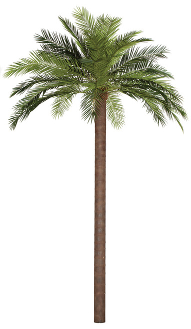PR-156000  15' Phoenix Palm Tree with Custom-Made Synthetic Trunk