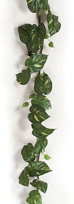 P-612828' Pothos GarlandLarge Leaf
