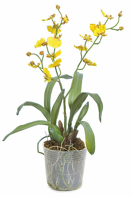 """P-7250016"""" Potted Dancing OrchidYellow"""